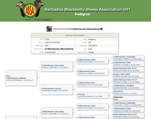 Post image for Barbados Blackbelly Sheep Association International